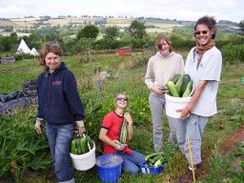 Free corporate volunteering days at Magdalen Farm