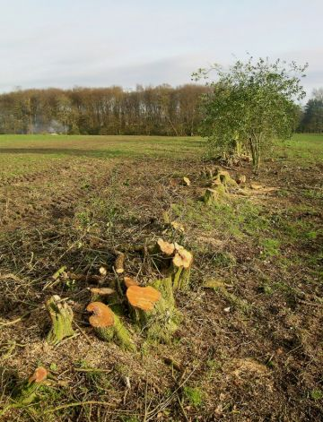 Hedgelaying - 6th November
