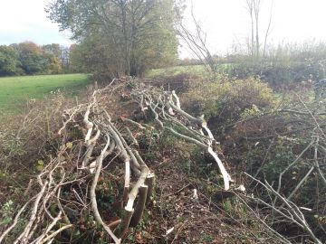 Hedge Laying - 8th January 2019