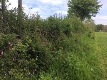 Hedgerows - the good, the bad and the ugly