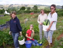 Volunteers picking veg Gallery