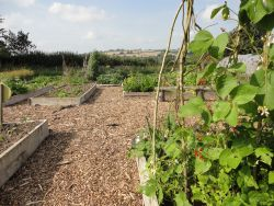 Raised bed in the kitchen garden Gallery