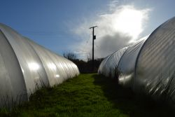 Polytunnels Gallery