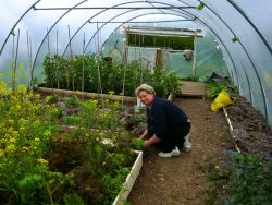 Helping in the Polytunnels Gallery