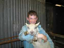 Boy holding an orphaned lamb Gallery